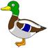 اردک هفت رنگ