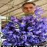 بازار گل تهران