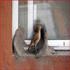 تصاویر زیبایی از پشتکار