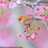 تصاویری زیبا از دنیای پرندگان