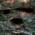 اشجار مخوفة